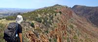 Bushwalker enjoying view from ridge on Larapinta | Andrew Bain