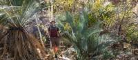 Inarlanga pass is home to moisture-loving plants such as river red gums, cycad palms and ferns | Gavin Yeates