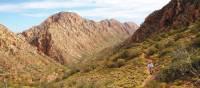 Verdant outback landscape on the Larapinta Trail | Latonia Crockett