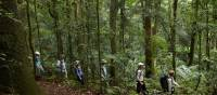 Rainforest walk on the Scenic Rim Trail