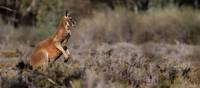 Wildlife spotting along the Murray River