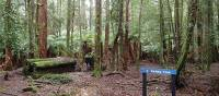 Beginning of a trail into the Rainforest | Holly-Mae Bedford